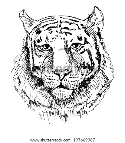Artwork tiger, sketch black and white drawing, isolated on white background. Head animals vector illustration  - stock vector