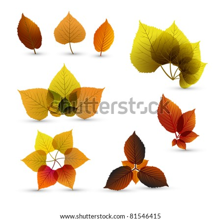 Autumn abstract leaf elements with nice details - stock vector