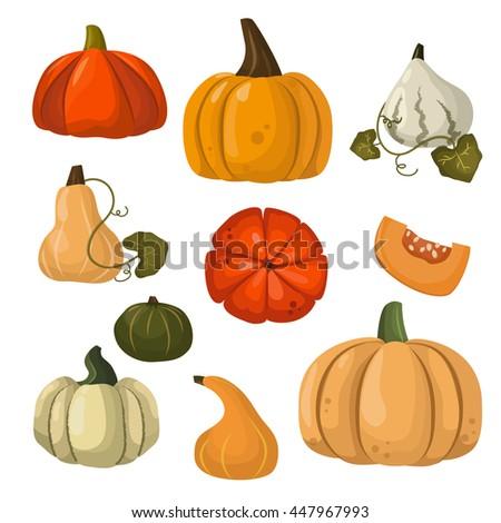 Autumn collection of pumpkin set elements design with different pumpkins oriental bittersweet vector illustration. Orange halloween pumpkin set vegetable collection. Harvest symbol season decoration. - stock vector