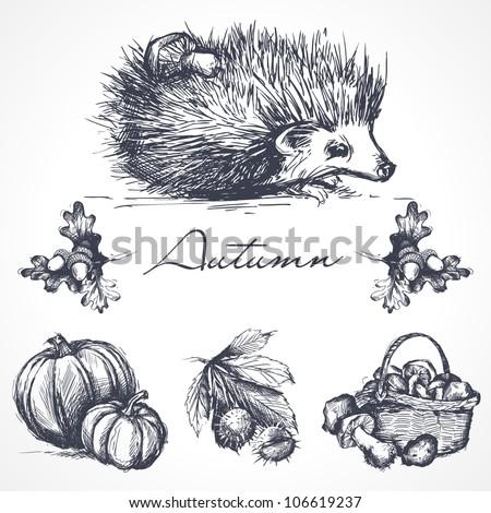 Autumn design elements - stock vector