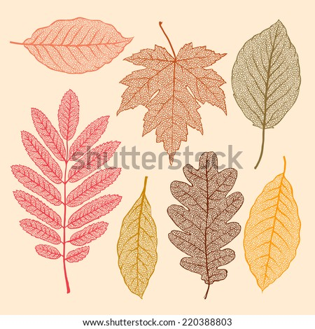 Autumn leaves, isolated dried leaves set, vector illustration.  - stock vector