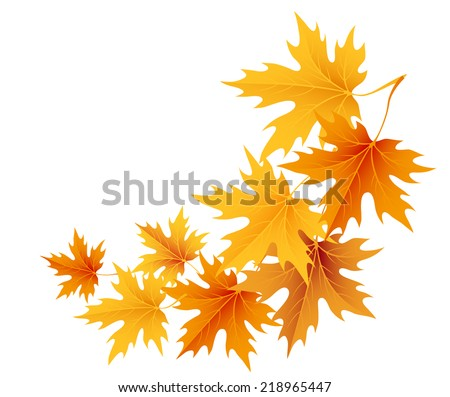 Autumn maple leaves isolated on white. Vector - stock vector