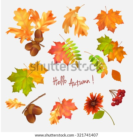 Autumn vector collection of fall leaves on white background - stock vector