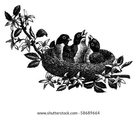 Baby Birds In Nest - Retro Clip Art - stock vector