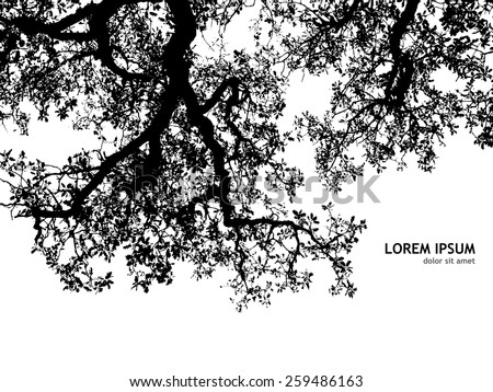 Background silhouette of tree branches. Vector - stock vector