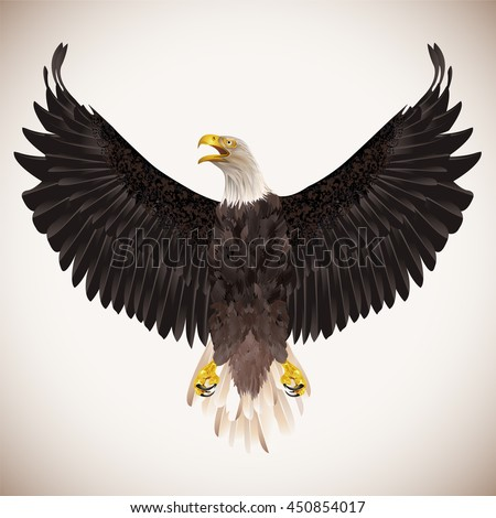 Bald eagle isolated on white background. Vector illustration. - stock vector