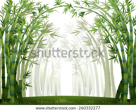 Bamboo forest when it full of fog - stock vector