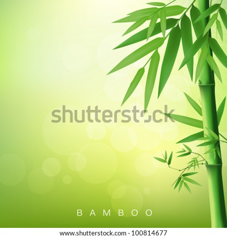 Bamboo green, vector illustration - stock vector
