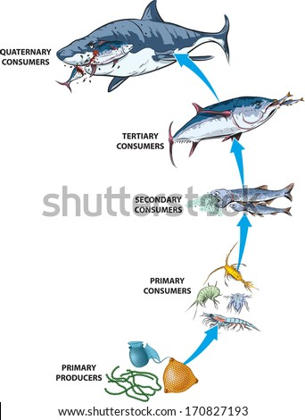 pacific ocean animals food chain  Food chain Stock Photos,