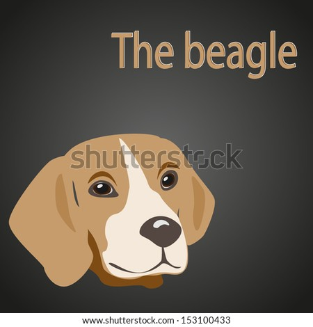 Beagle isolated head - stock vector