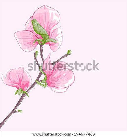 beautiful background with  twig blossoming magnolia tree - stock vector