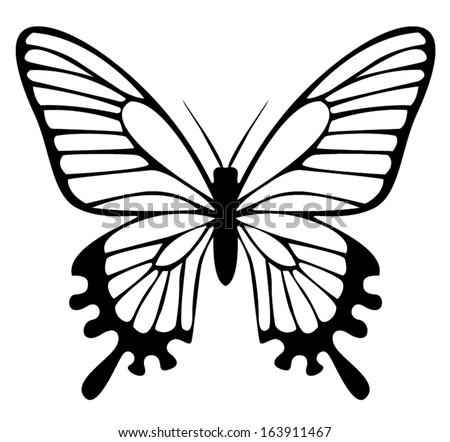 Beautiful black and white butterfly isolated on white - stock vector