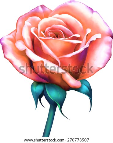 Beautiful bright pink, red sexy Rose bud, isolated on white background. Vector illustration - stock vector