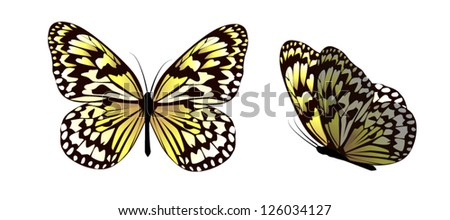 Beautiful butterfly with hearts on its wings. vector - stock vector