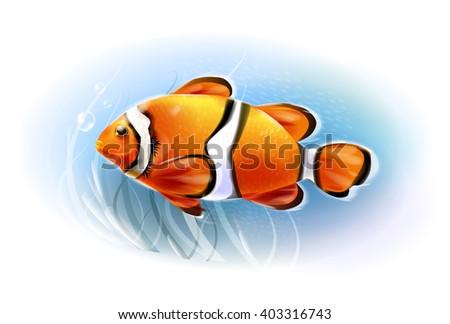 Beautiful clownfish in the sea.  Aquarium fish.  Underwater world. Realistic  illustration. - stock vector
