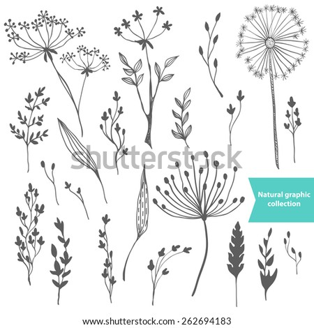 Beautiful color grass silhouette, natural collection - stock vector