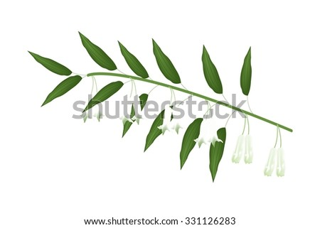 Beautiful Flower, Illustration of Solomons Seal Flowers or Polygonatum Multiflorum Flowers with Green Leaves Isolated on Transparent Background. - stock vector