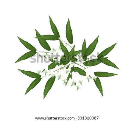 Beautiful Flower, Illustration of White Solomons Seal Flowers or Polygonatum Multiflorum Flowers with Green Leaves Isolated on Transparent Background. - stock vector