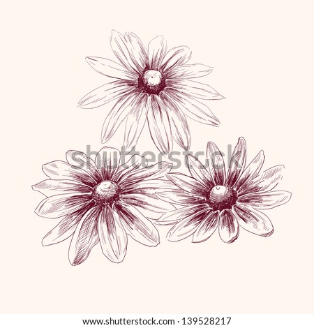 Beautiful Flowers daisies drawing vector illustration  isolated - stock vector