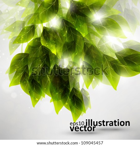 Beautiful green leaves, eco vector background eps10 - stock vector