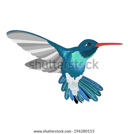 Beautiful Hummingbird - stock vector