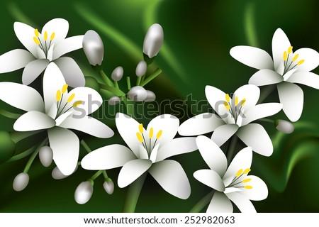 Beautiful jasmine flowers. - stock vector