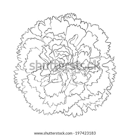 beautiful monochrome black and white carnation flower isolated on white background. Hand-drawn contour lines and strokes - stock vector