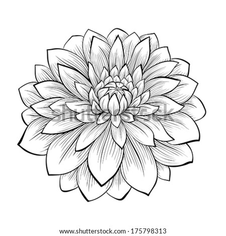 beautiful monochrome black and white dahlia flower isolated on white background. Hand-drawn contour lines and strokes. - stock vector