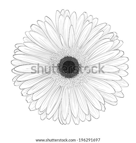 beautiful monochrome, black and white gerbera flower isolated. Hand-drawn contour lines and strokes. - stock vector