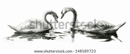 beautiful nature scene vector of swans floating in a lake, swans are hand drawn illustration isolated on white background, wedding invitation clip art, website header, elegant billboard or poster art - stock vector