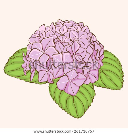 Beautiful pink hydrangea flowers. Decorative floral illustration - stock vector
