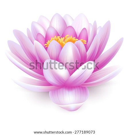 Beautiful pink water lily or lotus flower isolated on white background. - stock vector