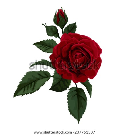 Beautiful red rose isolated on white. Perfect for background gre - stock vector
