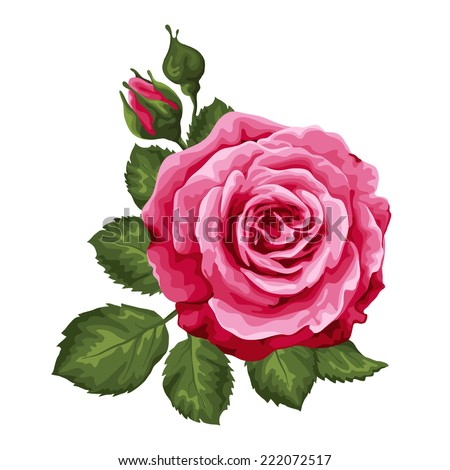 Beautiful rose isolated on white. Perfect for background greeting cards and invitations of the wedding, birthday, Valentine's Day, Mother's Day. - stock vector