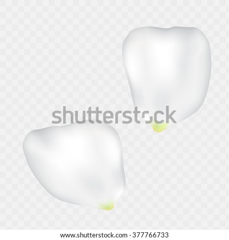 Beautiful set of white rose flower petal. Two vector big Roses petals vector isolated on transparent white. Created with mesh spring summer flowers petal concept. Tender romantic elements for design. - stock vector