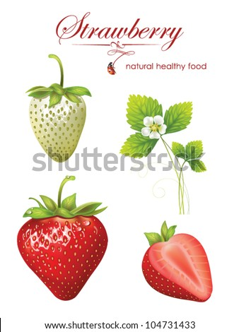 beautiful strawberries. vector illustration of a realistic - stock vector