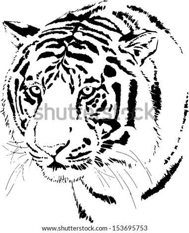 beautiful tiger head vector, scalable iconic image that can be put on any color background, hand drawn wildlife vector, zoo animal or safari nature drawing - stock vector