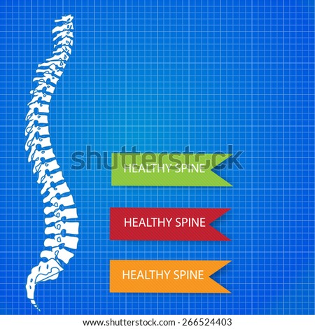 Beautiful timeline infographic medic spine human on the blueprint background - stock vector