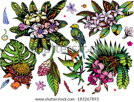 Beautiful Tropical Plants 2 Collection (Colorful Vector EPS10 Doodles) - stock vector