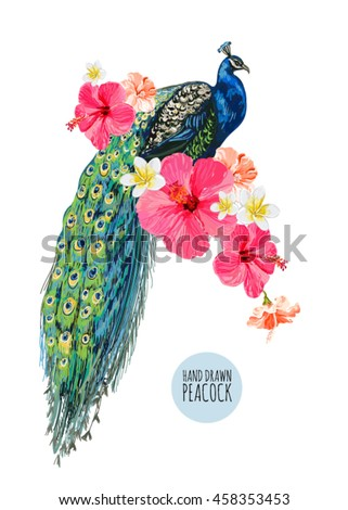 Beautiful vector floral illustration background with peacock, hibiscus. Boho style, isolated object. - stock vector
