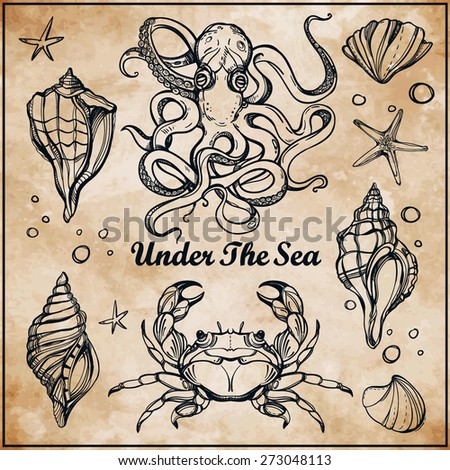 Beautiful vintage hand drawn linear marine life set. Shells, lobster, fish, octopus, crab, starfish. Design for summer. Isolated on aged paper background vector illustration. Sea for menu, textiles.  - stock vector
