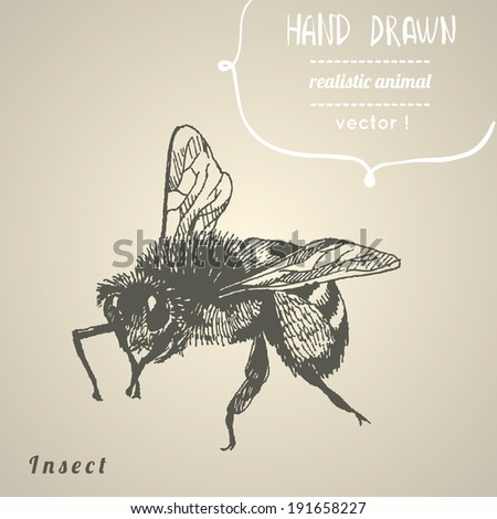 Bee. Hand drawn vector illustration. - stock vector
