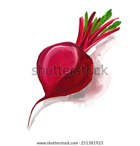 beet vector illustration  hand drawn  painted watercolor  - stock vector