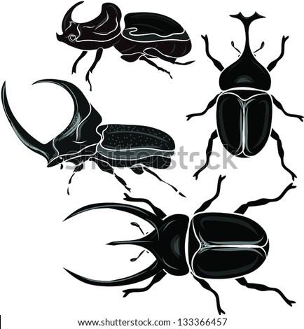 beetle - stock vector