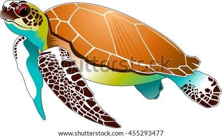 big beautiful sea turtle swimming in the sea, vector - stock vector