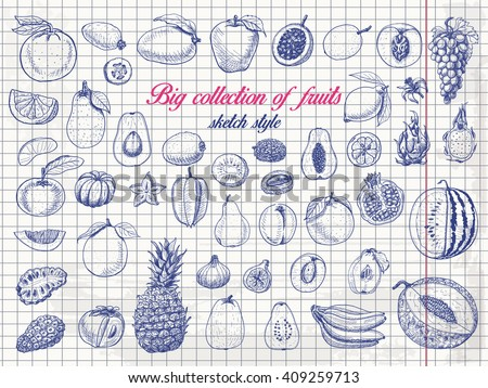 Big collection of fruits on paper. Vector  illustration for your design - stock vector