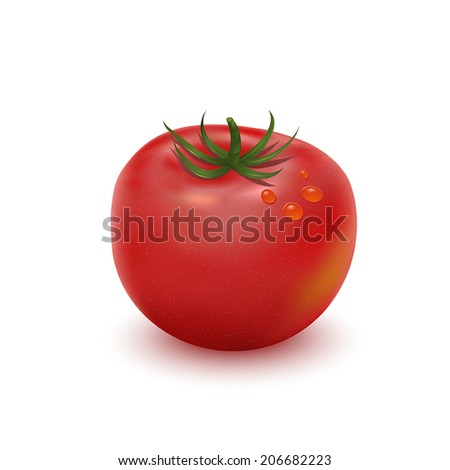 Big ripe red fresh tomato isolated on white - stock vector