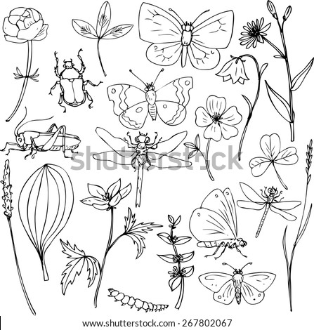 big set of ink drawing meadow objects, plants, flowers, grass, insects, hand drawn vector illustration - stock vector
