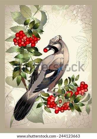 Bird a jay on a mountain ash branch.Greeting card with a bird. - stock vector