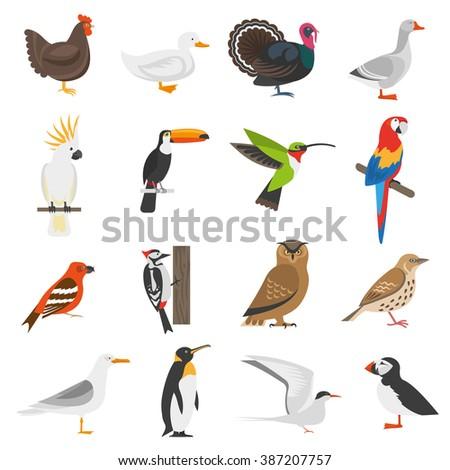 Bird flat color icons set of penguin woodpecker parrot owl turkey goose chicken duck isolated vector illustration   - stock vector